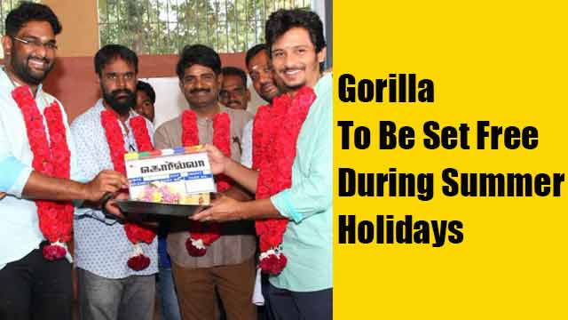 Gorilla To Be Set Free During Summer Holidays